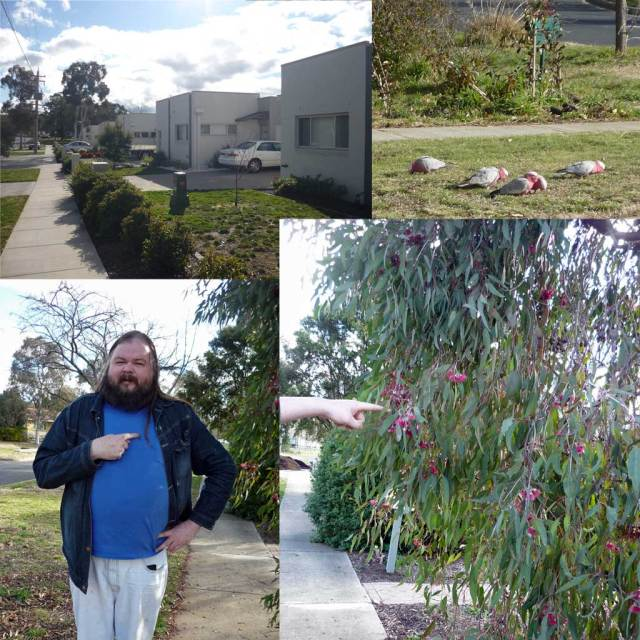 Clockwise: boxes, galahs, Dac, flowering gum