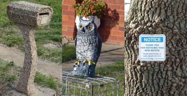 Seen in front yards: pebble-dash letterbox, owl, notice