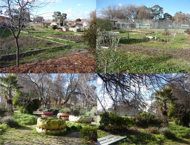 Narrabundah allotments and community gardens