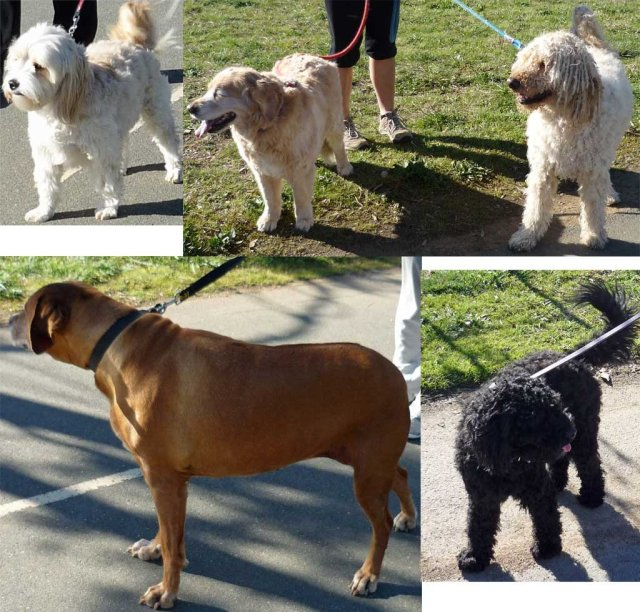 Five dogs we saw on our walk