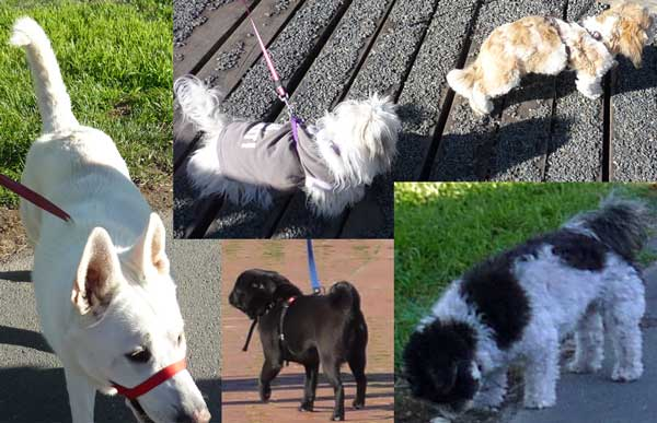 Five more dogs we saw on our walk