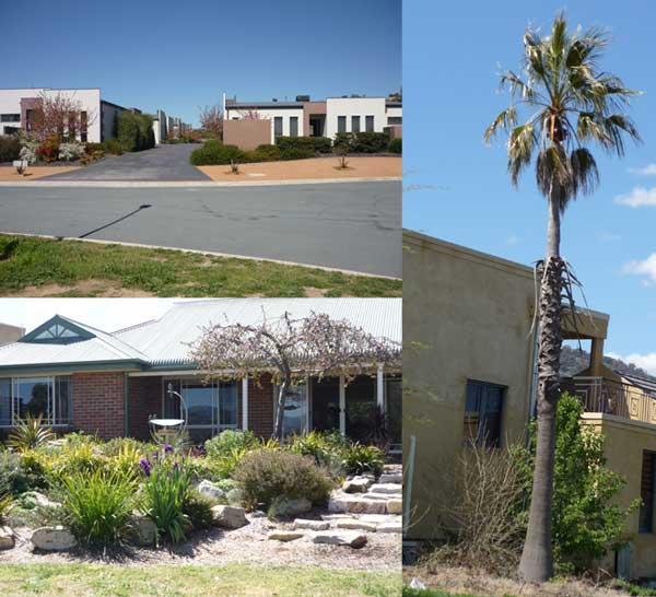 Clockwise: boxy houses, palm tree, bird bath