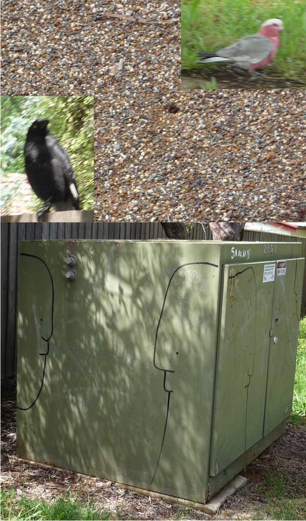Ant nest, galah, currawong, power substation with outline graffiti