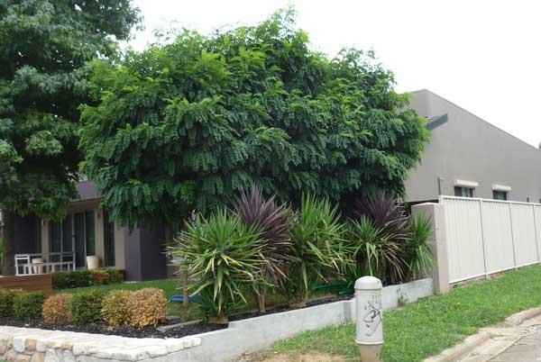 A modern Canberra house
