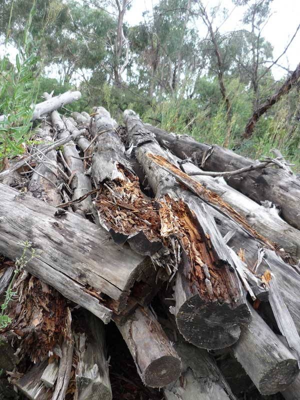 A pile of cut and disintegrating tree trunks by the side of the road
