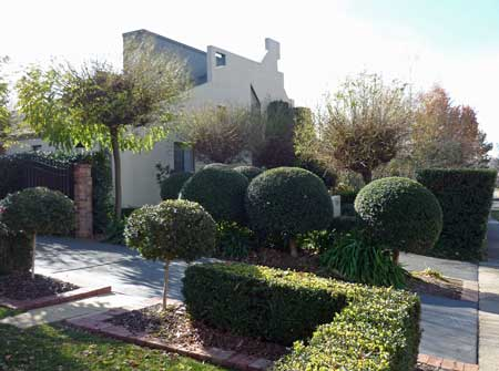 A formal garden with topiary